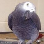 a parrot dance you won't like to miss! .video